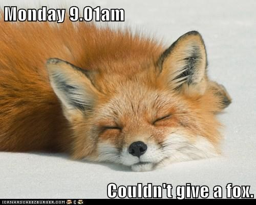 foxes,give a fudge,sleeping,monday