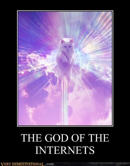 cat internet gods cute - 6751591168
