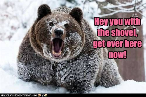 get over here,bear,now,demand,shovel