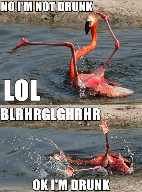 drunk Party flamingo funny - 6751852544