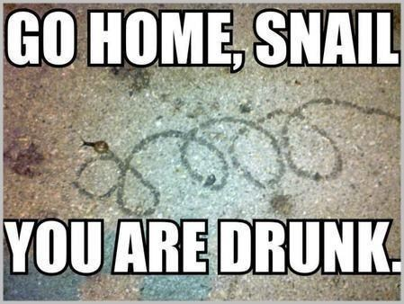 snails go home snail you are drunk had enough too drunk