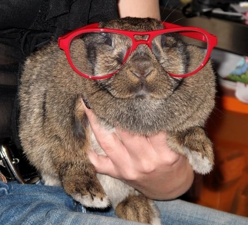 Bunday fashion happy bunday glasses rabbit bunny - 6751902208