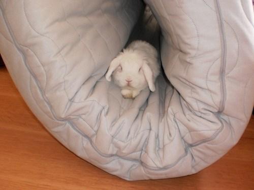 Bunday cozy happy bunday futon rabbit bunny - 6751909376