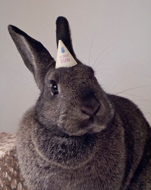 Bunday birthday happy bunday Party rabbit bunny hat - 6751925248