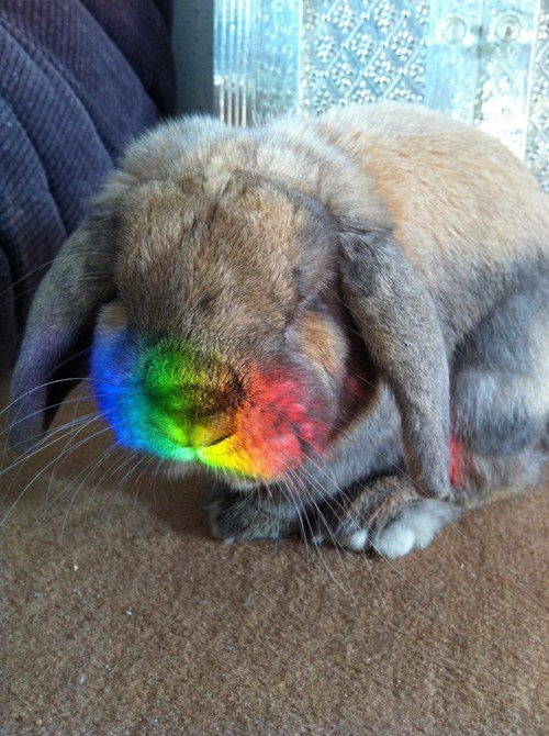 Bunday happy bunday rabbit bunny squee rainbow whiskers - 6751948288