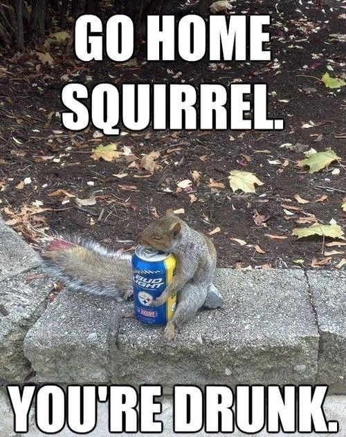 go home crunk critters squirrel beer alcohol drunk squirrels Memes