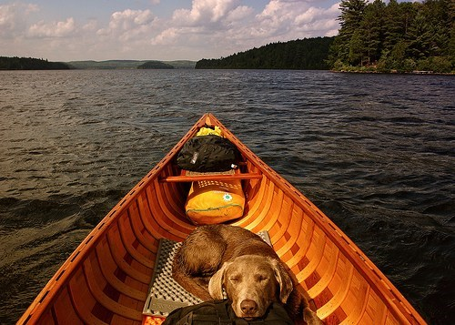 canoe pet camping Travel lake dogs Hall of Fame best of week