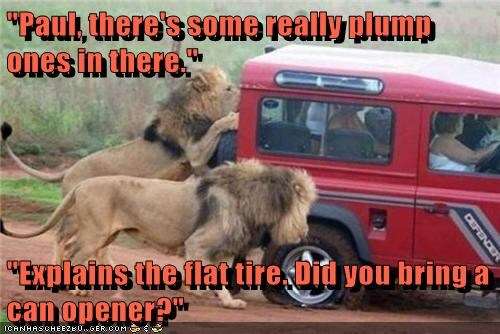 excited lions eating people car flat tire plump can opener - 6752350976
