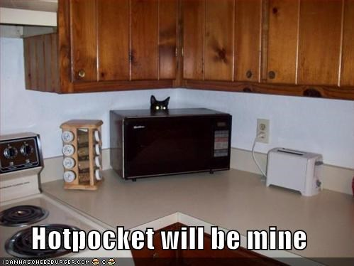 basement cat,hotpocket,lolcats,microwave