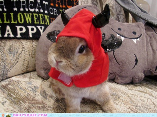 Bunday costume reader squee halloween pet rabbit bunny squee - 6752391680