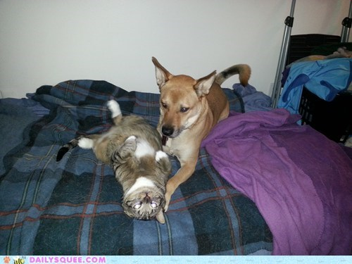 dogs,bed,reader squee,mutt,Interspecies Love,Cats,squee