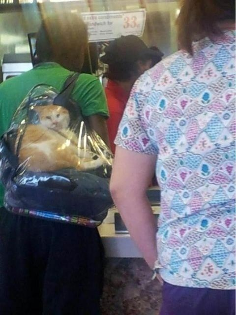 cat,bag,pets,what,airport,Hall of Fame,Travel,carry on,best of week