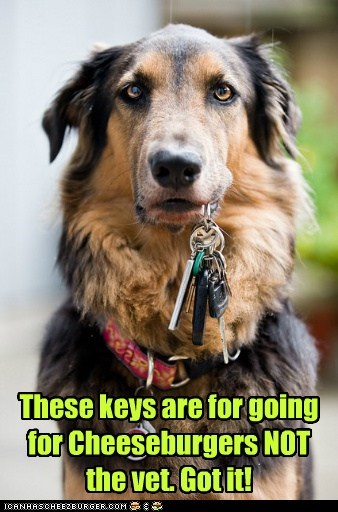 cheesburger car keys dogs driving vet what breed