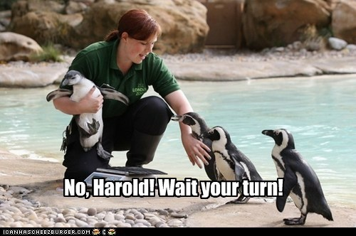 impatient,wait,weighing,turns,penguins,harold,no