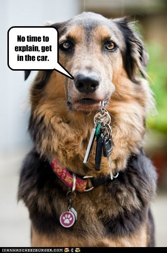 car keys dogs no time to explain what breed - 6753009920