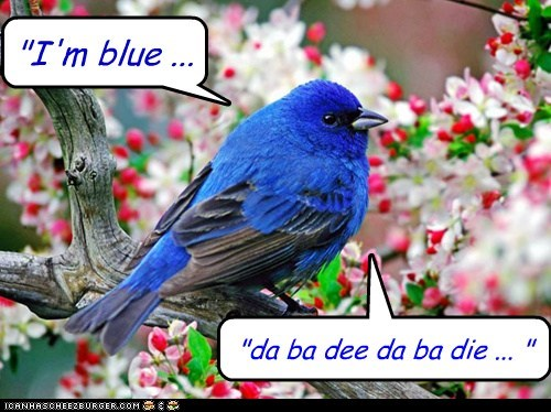 blue,eifel 65,singing,song,bluebird