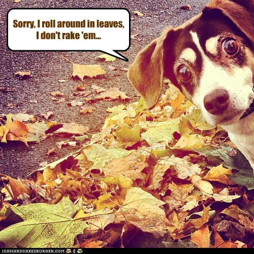 Sorry, I roll around in leaves, I don't rake 'em...