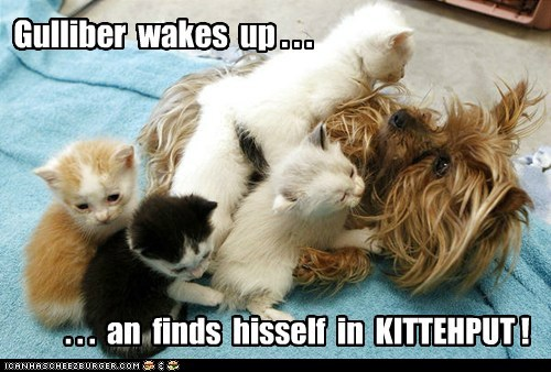 Gulliber wakes up . . . . . . an finds hisself in KITTEHPUT !