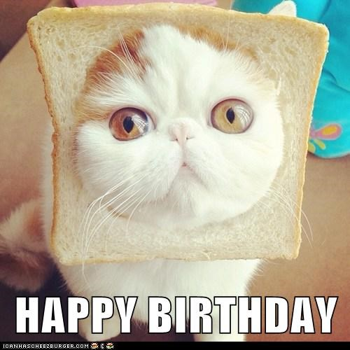 happy birthday meme of a cat head sticking through a piece of bread