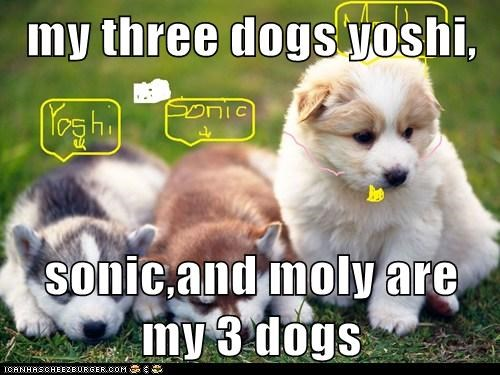my three dogs yoshi,  sonic,and moly are my 3 dogs