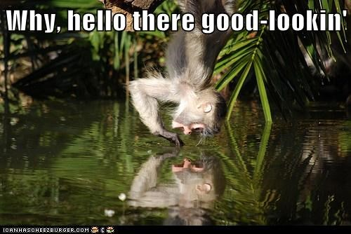 flirting,yourself,water,reflection,hello there,monkey