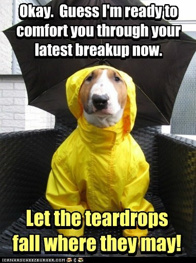 raincoat bull terrier dogs break up comforting