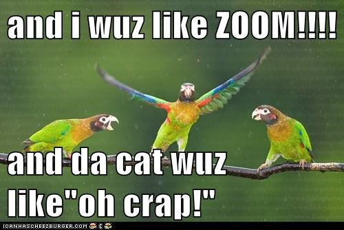 exaggerating,cat,zoom,impressed,parrots,story