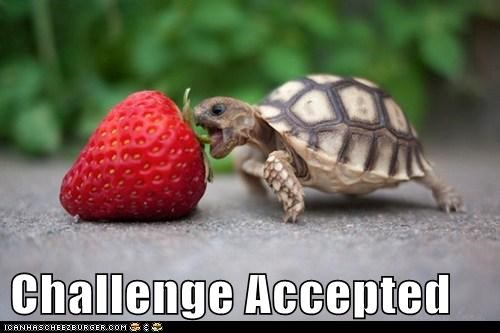 Challenge Accepted,strawberry,small,food,turtle