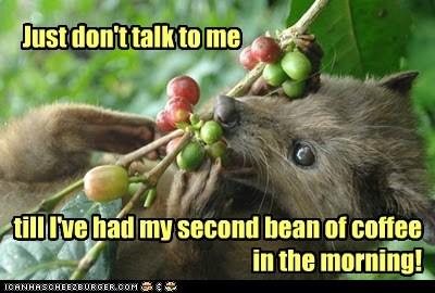 coffee beans civet cranky morning addiction - 6754537984