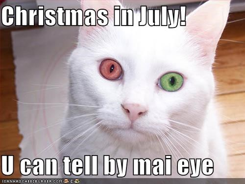 Christmas In July Cat Meme.Christmas In July U Can Tell By Mai Eye Cheezburger