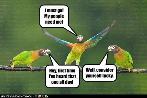 old,parrots,my people need me,first time,i must go,classics,lucky