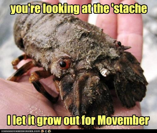mustache movember shaved slipper lobster