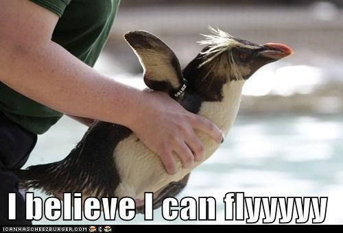 holding,wings,penguins,i believe i can fly,flying