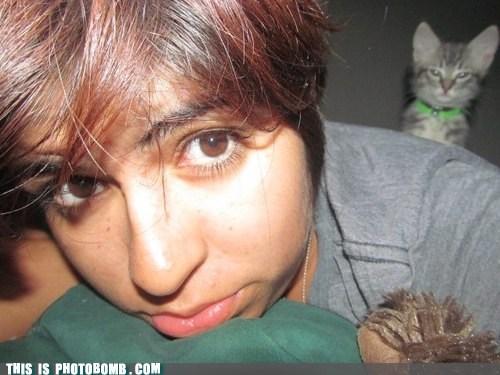 kitteh cat SOON - 6754953984