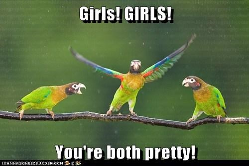 arguing,parrots,girls,mistake,pretty