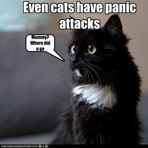 Mommy? Where did u go Even cats have panic attacks