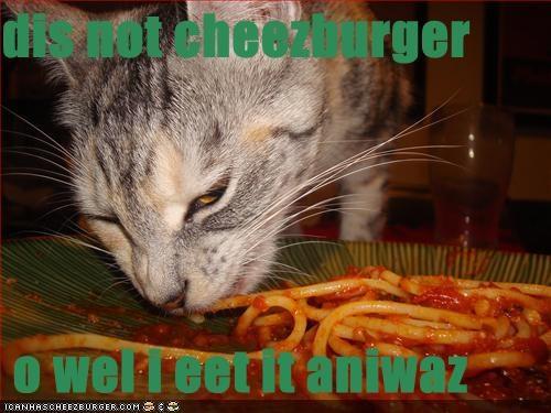 Cheezburger Image 675603712