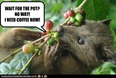 impatient,coffee beans,need it,civets,now,coffee,eating