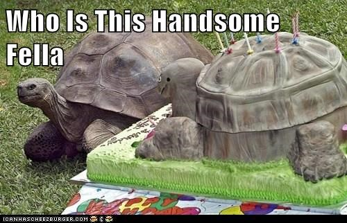 cake,turtles,handsome,who is this,looks like