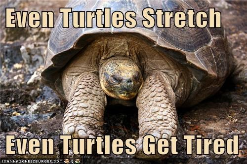 Even Turtles Stretch  Even Turtles Get Tired