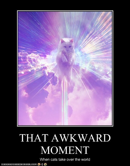 THAT AWKWARD MOMENT When cats take over the world
