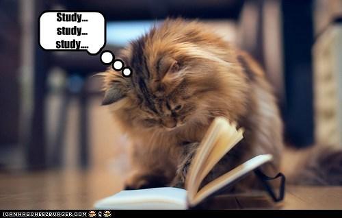 Study... study... study....