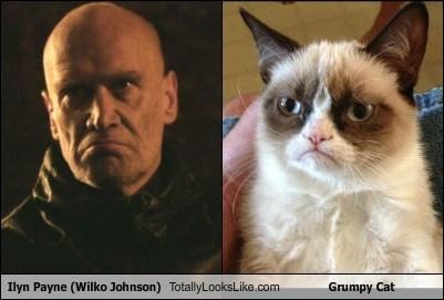 TLL ilyn payne Grumpy Cat tard wilko johnson funny - 6757213440