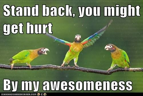 parrots stand back awesomeness cocky ego