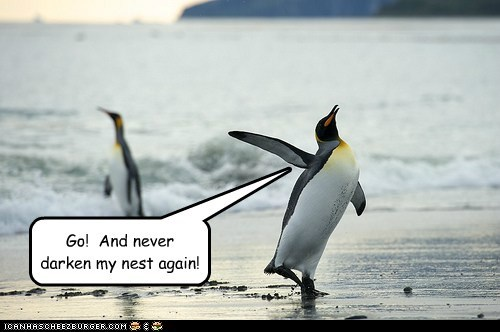 nest,walking away,penguins,go,angry,breaking up