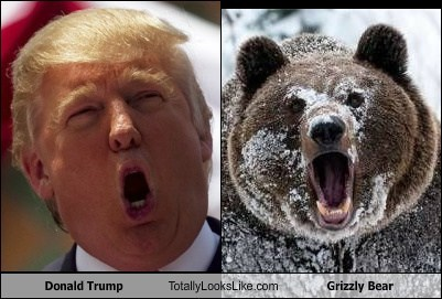 donald trump,TLL,grizzly bear,bear,animal,funny