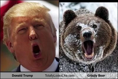 donald trump TLL bear animal funny - 6757678336