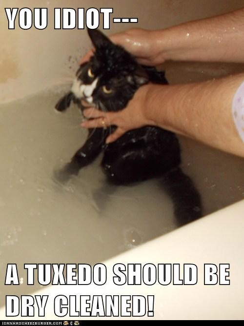 tuxedo,wash,captions,bath,dry clean,Cats