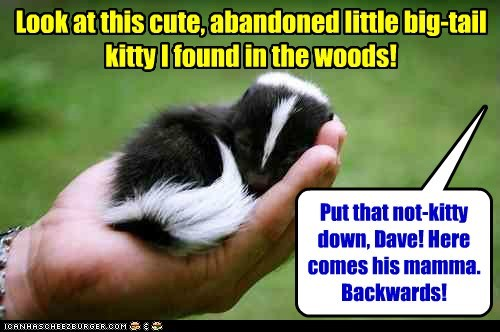 scary baby skunks run backwards kitty - 6757867264