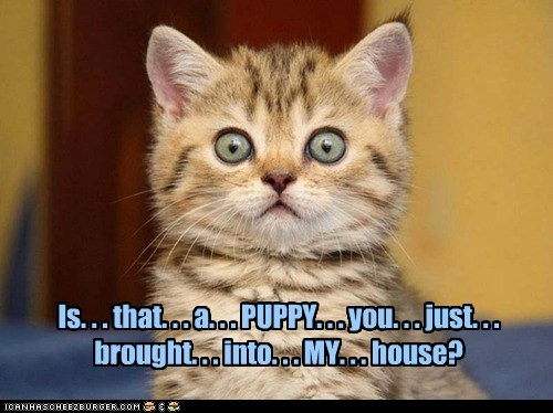 Is. . . that. . . a. . . PUPPY. . . you. . . just. . . brought. . . into. . . MY. . . house?